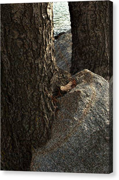 Rockin Tree Canvas Print