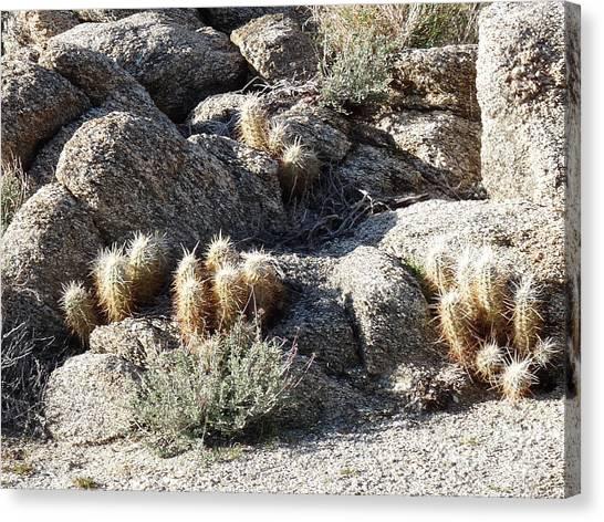 Rocks And Cactus Canvas Print by Deborah Smolinske