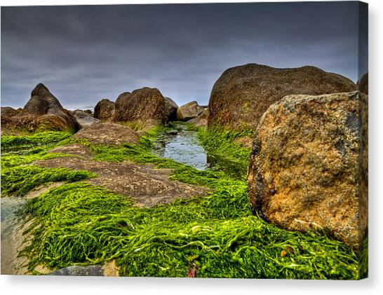 Rocks And Seaweed Canvas Print
