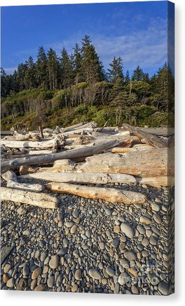 Rocky Beach And Driftwood Canvas Print