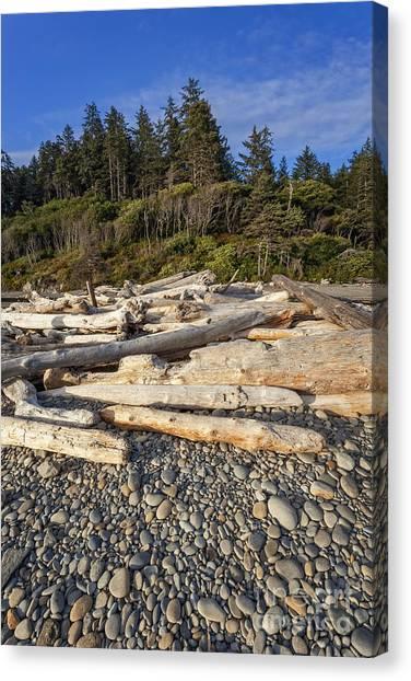 Rocky Beach And Driftwood Canvas Print