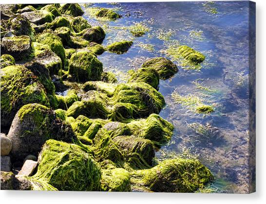 Rocky Green Canvas Print by Kenneth Feliciano