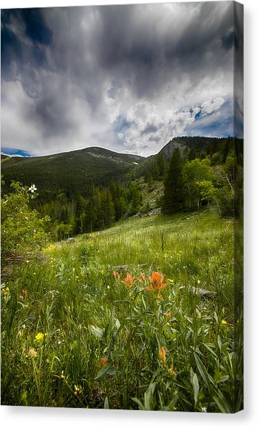 Rocky Mountain Meadow Canvas Print by Garett Gabriel