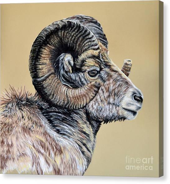 Rocky Mountain Ram Canvas Print by Ann Marie Chaffin