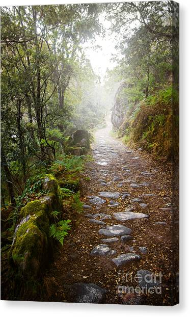 Rain Forest Canvas Print - Rocky Trail In The Foggy Forest by Carlos Caetano