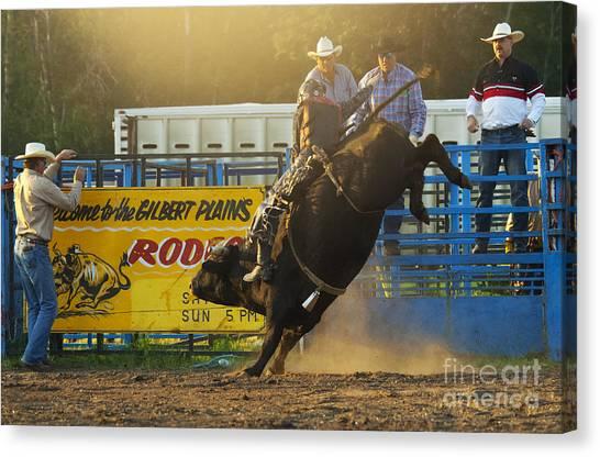 Bull Riding Canvas Print - Rodeo Bull Riding by Bob Christopher