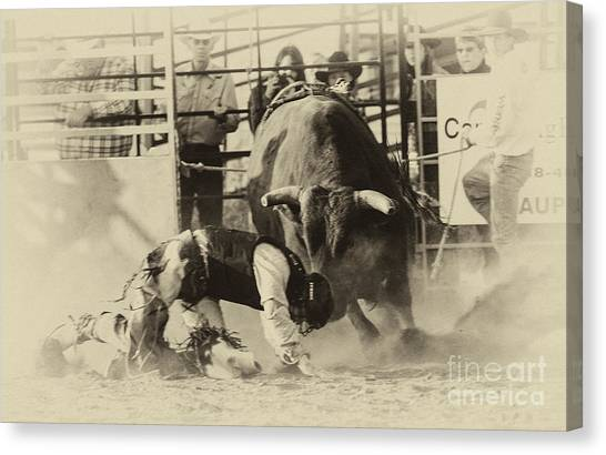 Bull Riding Canvas Print - Rodeo Prepared To Be Punished by Bob Christopher
