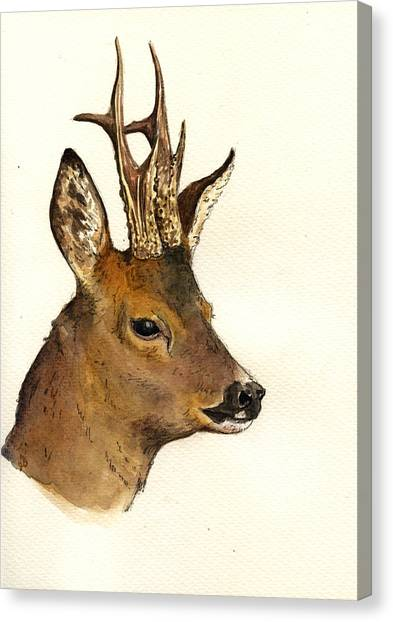Deer Canvas Print - Roe Deer Head Study by Juan  Bosco