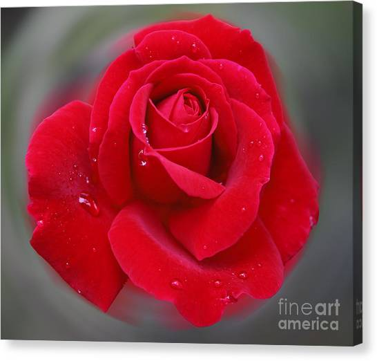 Rolands Rose Canvas Print