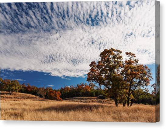 Austin Texas Canvas Print - Rolling Hills Of The Texas Hill Country In The Fall - Fredericksburg Texas by Silvio Ligutti