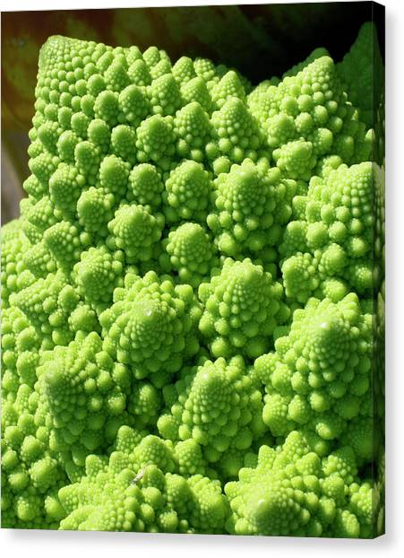 Broccoli Canvas Print - Romanesco Broccoli by Steve Allen/science Photo Library