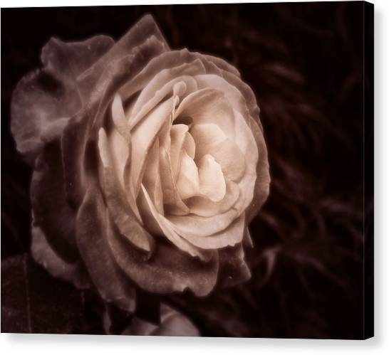 Romantica Canvas Print