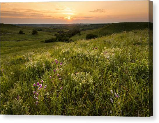 Clover Canvas Print - Room To Breathe by Scott Bean