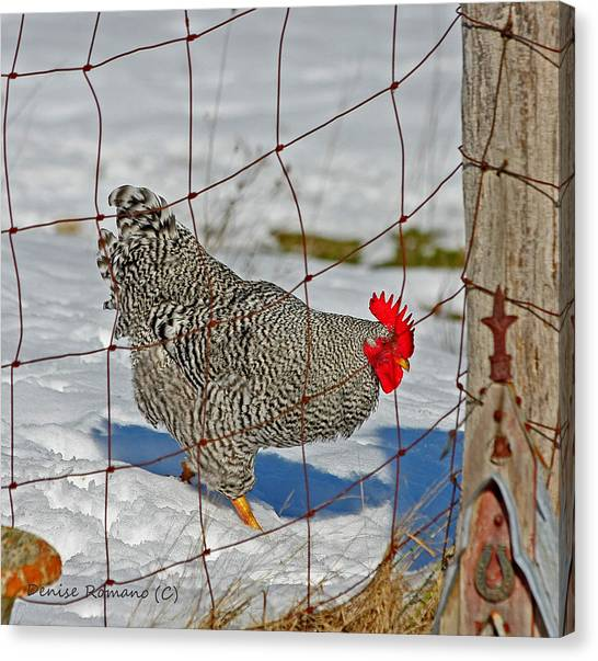 Rooster George Canvas Print