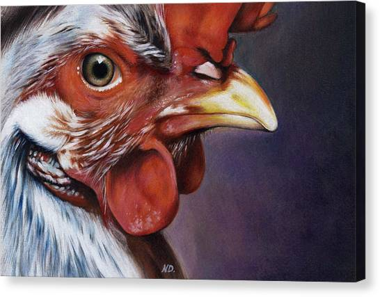 Chicken Farms Canvas Print - Rooster by Natasha Denger