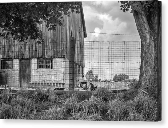 Rain Barrel Canvas Print - Rooster Turf Monochrome by Steve Harrington
