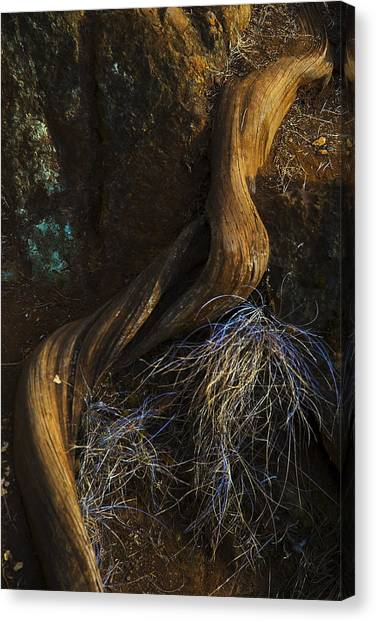 Tree Root Canvas Print