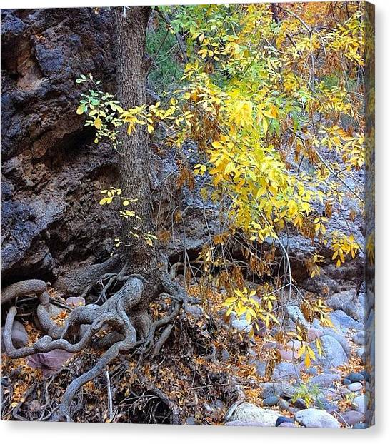 Autumn Leaves Canvas Print - Roots And Autumn Leaves by Ryan Hoffman