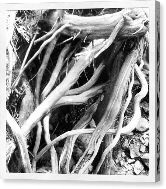 Tools Canvas Print - Roots by B Saw