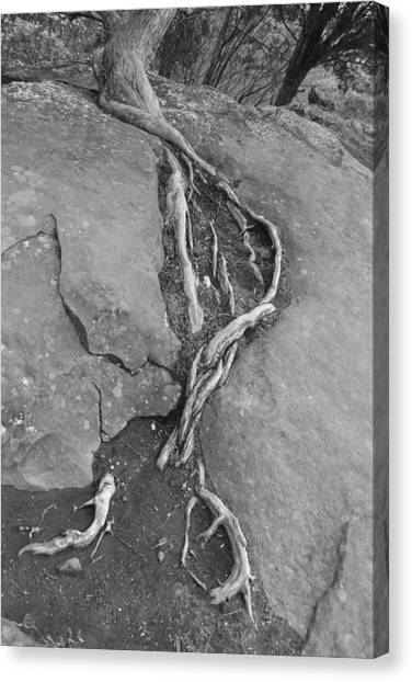 Roots I Canvas Print