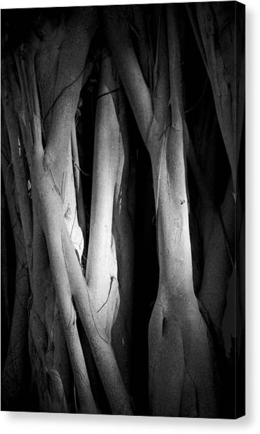 Roots Canvas Print by Nancy Edwards