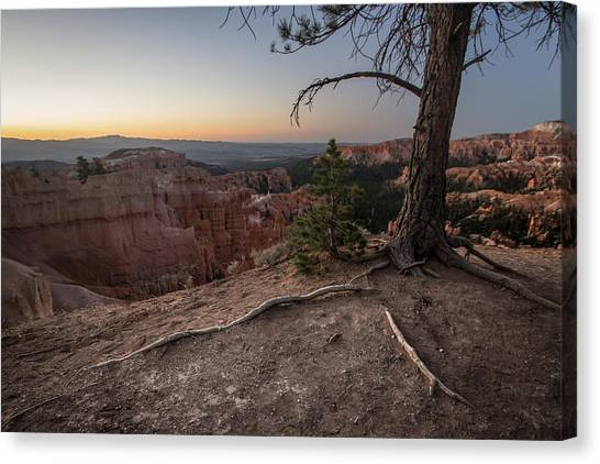Roots On The Rim 1 Canvas Print