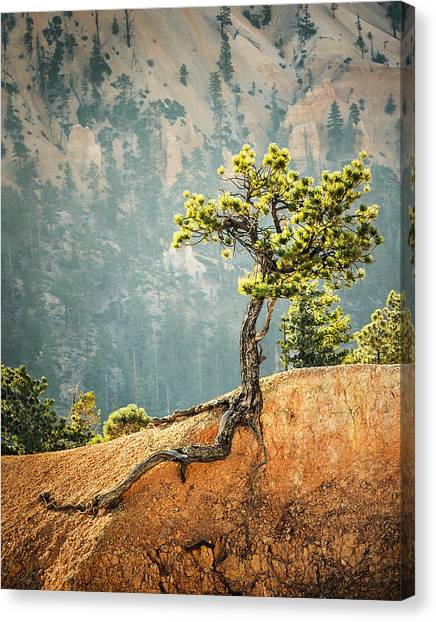 Roots Rock Canvas Print by Nancy Strahinic