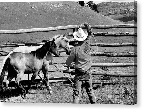 Roping The Young Ones Canvas Print