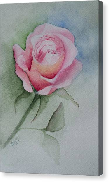 Rose 1 Canvas Print by Nancy Edwards