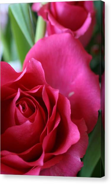Rose 10 Canvas Print