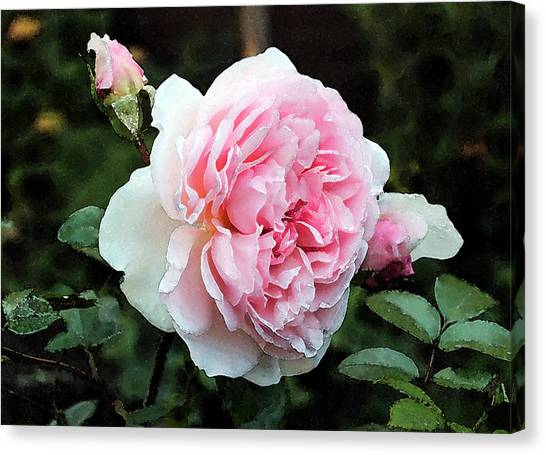 Canvas Print featuring the photograph Rose 2 by Helene U Taylor