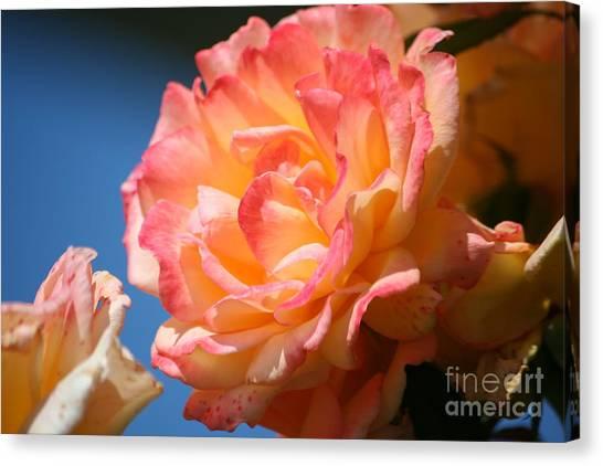 Rose Ablaze Canvas Print