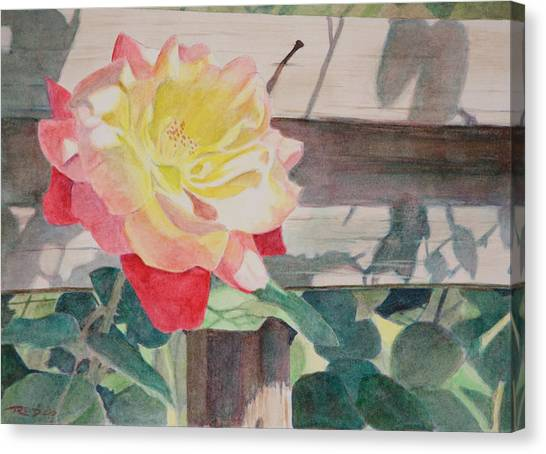 Rose Aglow Canvas Print