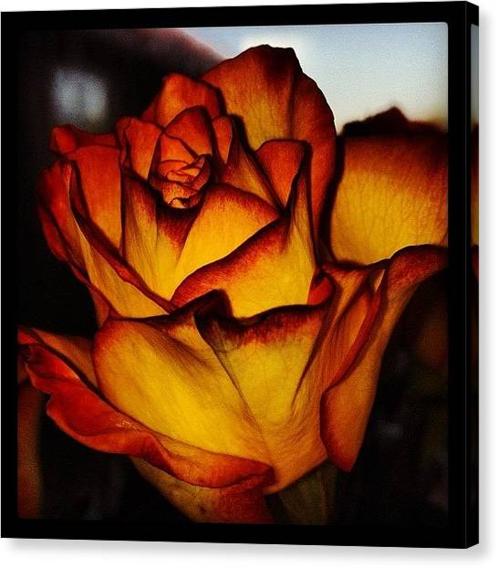Red Roses Canvas Print - #rose #flower #orange #red #roses by Joanna Hayes