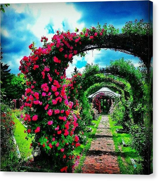 Syracuse University Canvas Print - Rose Garden by Whitney Wagner