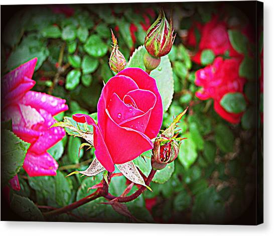 Rose Garden Centerpiece 2 Canvas Print