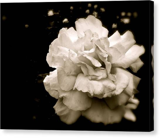 Rose I Canvas Print
