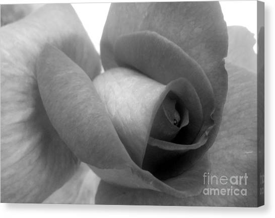 Rose In Black And White Canvas Print by Ioanna Papanikolaou