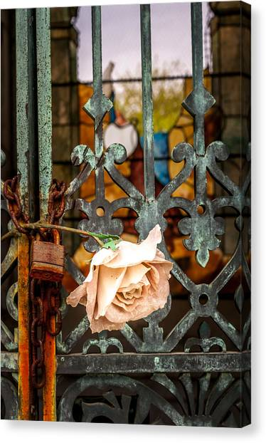 Rose In Remembrance Canvas Print