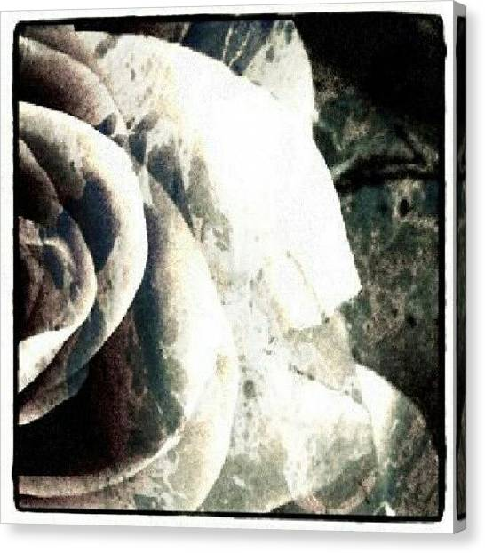 Decorative Canvas Print - Rose In Retro by Jacqueline Schreiber