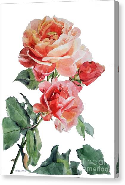 Watercolor Of Red Roses On A Stem I Call Rose Maurice Corens Canvas Print
