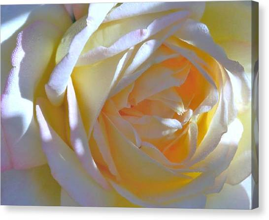 Rose Canvas Print by N S