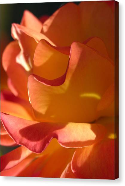 Rose Of Light Canvas Print by Lucy Howard