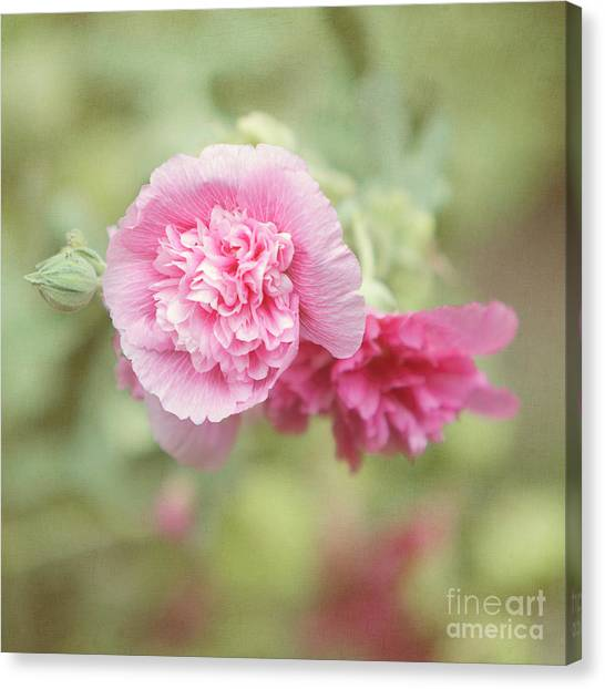 Althea Canvas Print - Rose Of Sharon by Kay Pickens