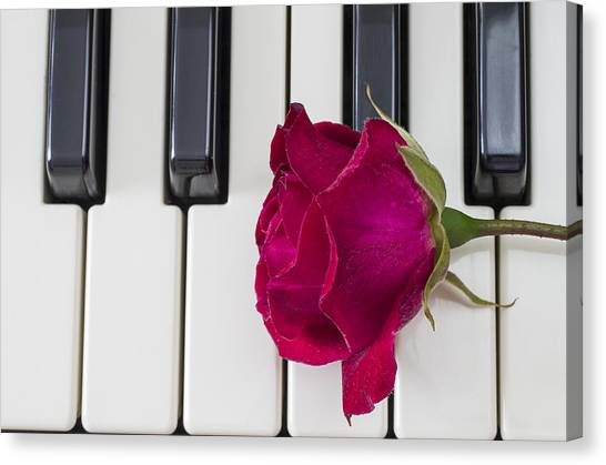 Rose Over Piano Keys Canvas Print