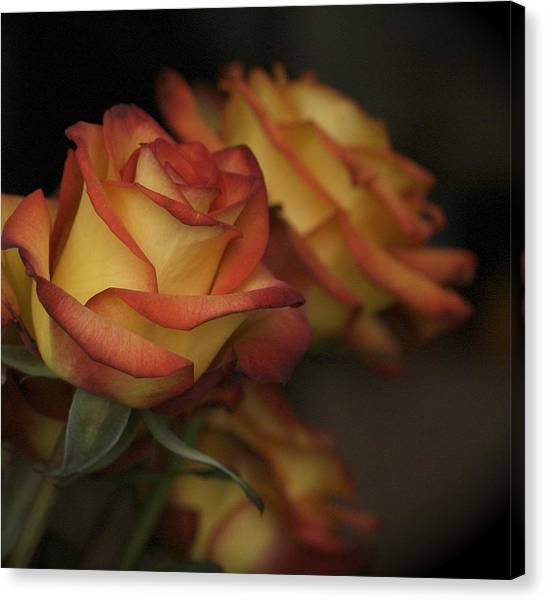 Rose Parade Canvas Print