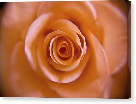 Rose Spiral 2 Canvas Print by Kim Lagerhem