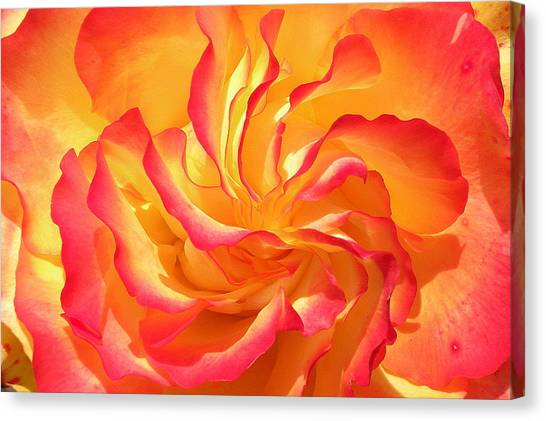 Rose Swirl Canvas Print