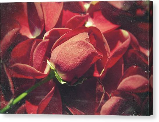 Analog Canvas Print - Rose by Taylan Apukovska
