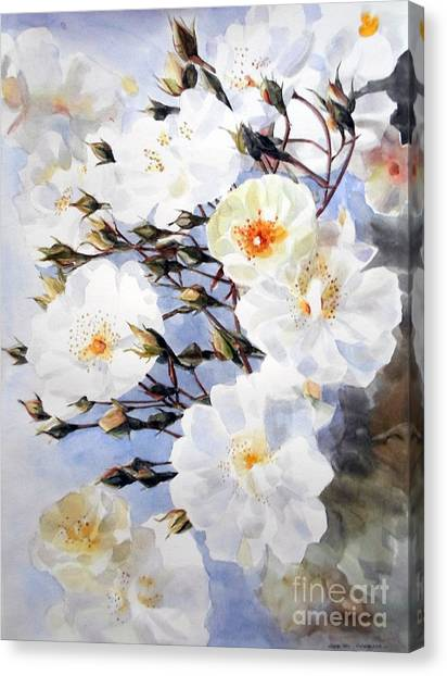 Wartercolor Of White Roses On A Branch I Call Rose Tchaikovsky Canvas Print